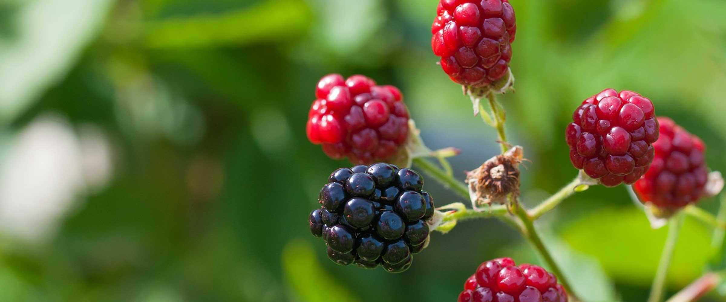 azienda vivaistica frutticultura Orvieto