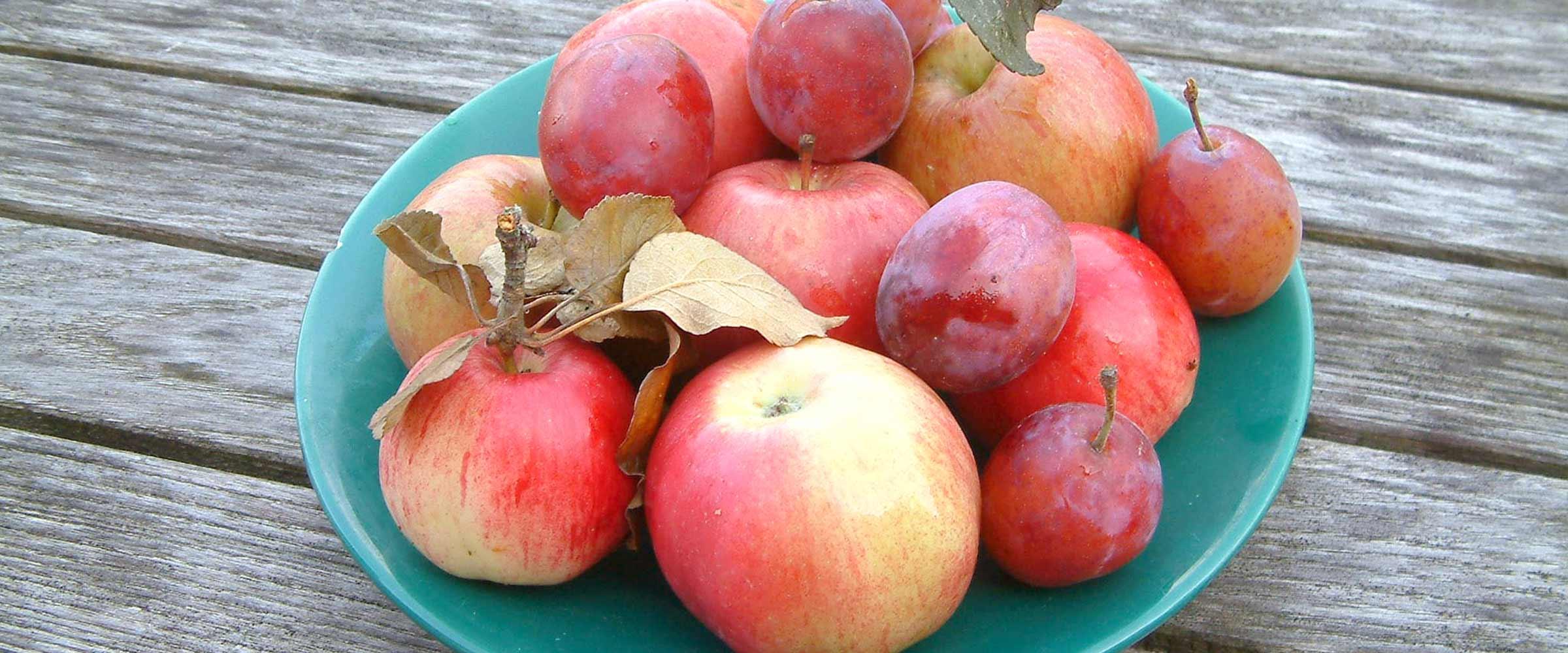 frutti antichi varietà rare piante da frutto